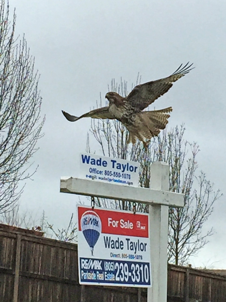 Hawk and sign