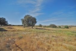 north pasture west